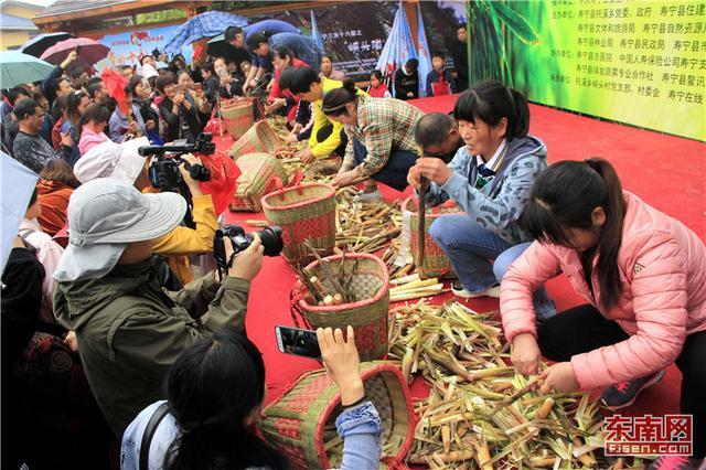 寿宁:托溪采笋节 引来八方客