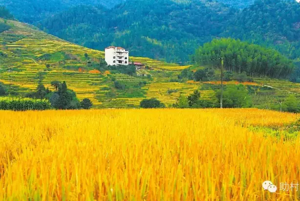 东坂畲族村 一个村的乡土再造构想