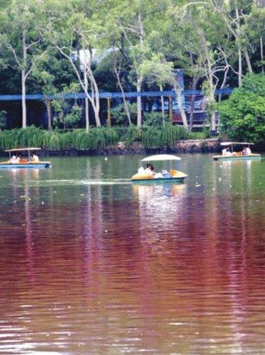 西湖水突然变红 原是截污工程搞实验