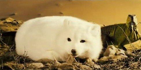 唯美九尾白狐动物图片