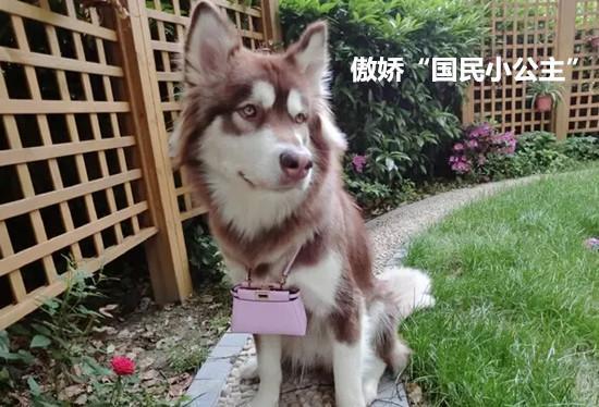 真的有女人跟狗做的吗