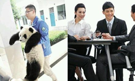洋葱新闻:活不如狗 王思聪悬赏100万竟为了它?