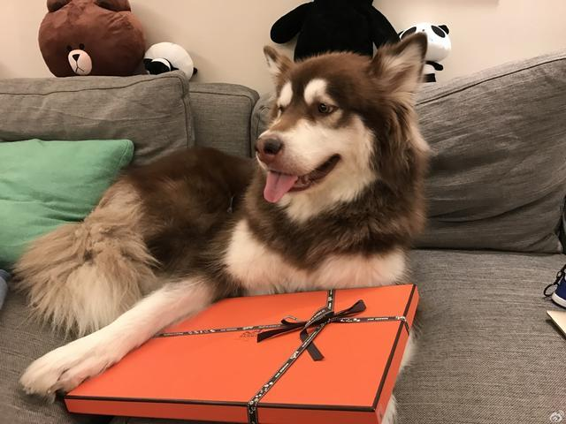 不包括买奢侈品 王思聪爱犬每个月开销超过8000块