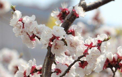 看准花期赏花 盘点国内各色花何时何地开