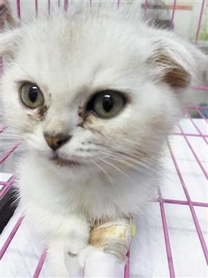 """深圳情侣买到""""星期猫"""" 宠物半月后死亡(图)"""