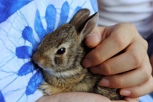 澳门新葡京网站必学!饲养兔子小知识