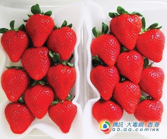 草莓当造 必吃新品种极甜熊本县草莓