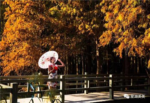 拒绝寒风的冷意,冬日来肇庆看落羽杉