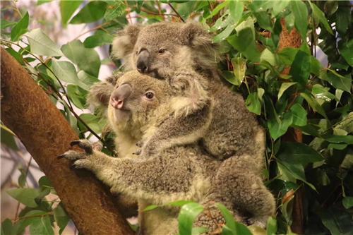 摄于长隆野生动物世界