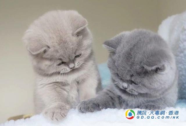 日本旅游必买猫咪邮票 寄出明信片