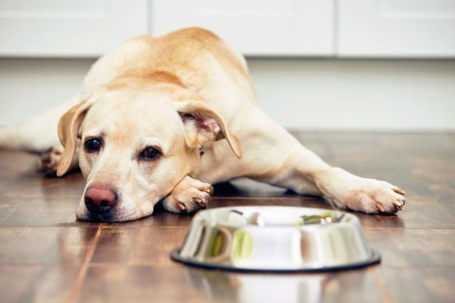 狗狗的干粮饲料与自煮鲜食