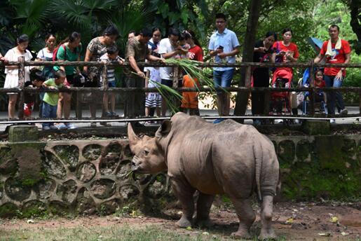 """深圳野生动物园里欢乐多 可爱动物让孩子们""""哇""""不停"""