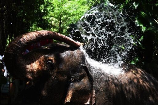 深圳野生动物园可爱动物们惬意消暑_大粤网_腾讯网