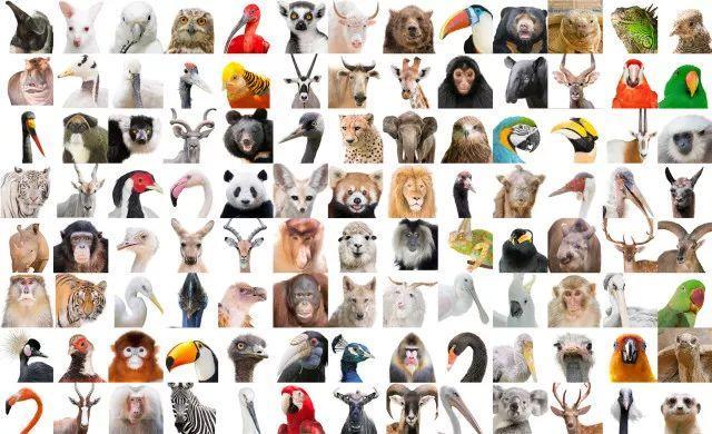 世界野生动植物日——保护虎豹,你我同行