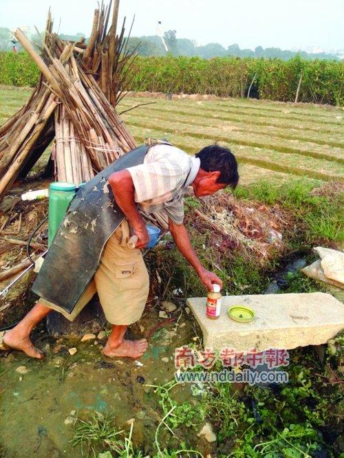 珠海有菜农种萝卜喷高毒农药 现很多死蚯蚓