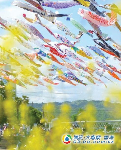 日本鲤鱼节是什么?大阪河岸边赏鲤鱼边野餐