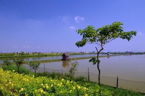 畅游广州近郊番禺海鸥岛 感受一派渔家风情