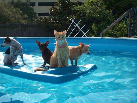 夏季必读 猫狗外出注意事项