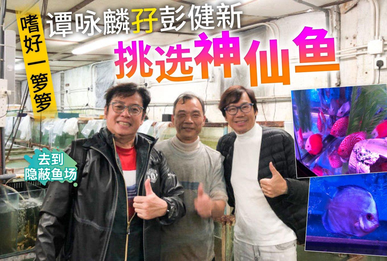 谭咏麟�I彭健新挑选神仙鱼