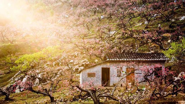 翁源5万亩桃花海规模冠全省,现实版桃花源带动乡村旅游增收