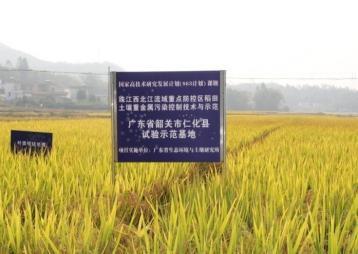 广东科学技术奖 | 重金属污染的农田有了它就能……