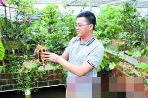 东莞大学生养龟创业 两年身家达两千万元