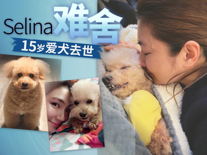 15岁爱犬离世 Selina泪崩