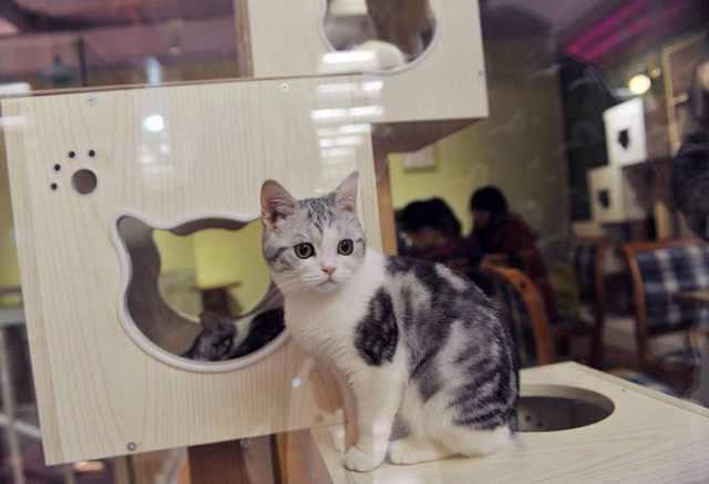 禁止宠物进入的标志基本于每个商场可见 近日,在广州英雄广场附近,有一家三层的大型商场,从今年起,该商场号称自己是广州首家允许宠物进入的商场。小编今天在该商场见到,里面最自由自在的就是各式各样的猫了。在商场的入口处,有多只猫咪会提醒你注意在使用扶梯时注意安全,为让猫咪进商场做了细致的安排,商场内多处设有放置为方便擦净猫排泄纸张的箱子。