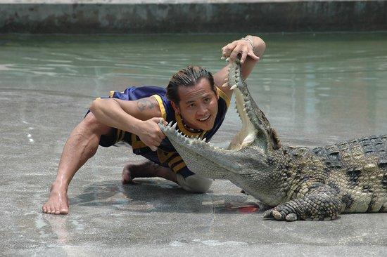 水禽婀娜多姿,鳄鱼让人大开眼界.图片