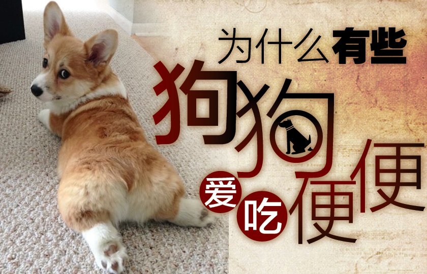 狗狗吃粪便是天性?