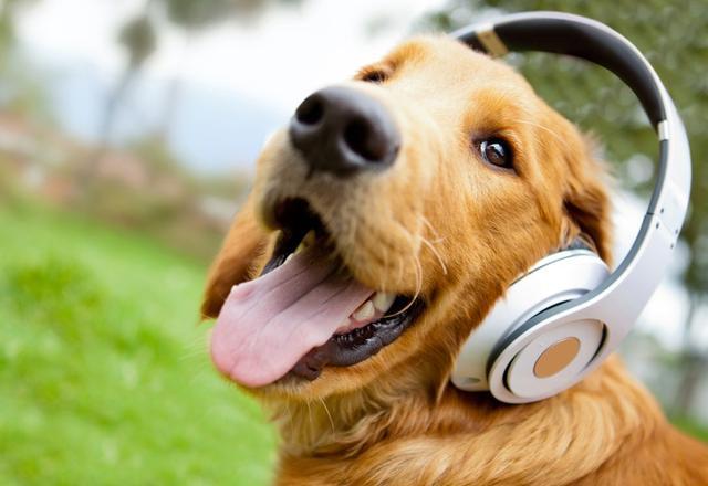 不同风格音乐 毛孩听到什么?
