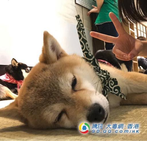 日本塌塌米咖啡店内藏萌柴 网友:这里不是天堂是什么