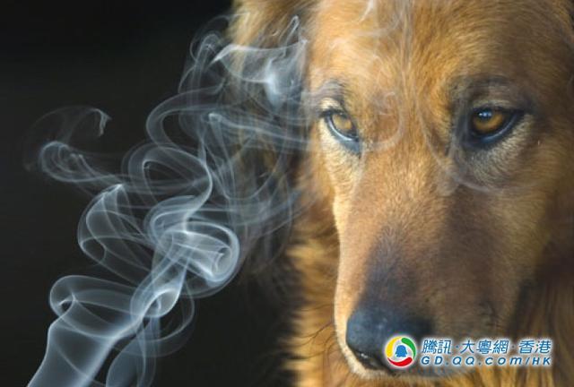 主人吸烟 猫狗更高机会患癌