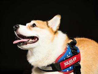 狗只肢体语言-笑面?