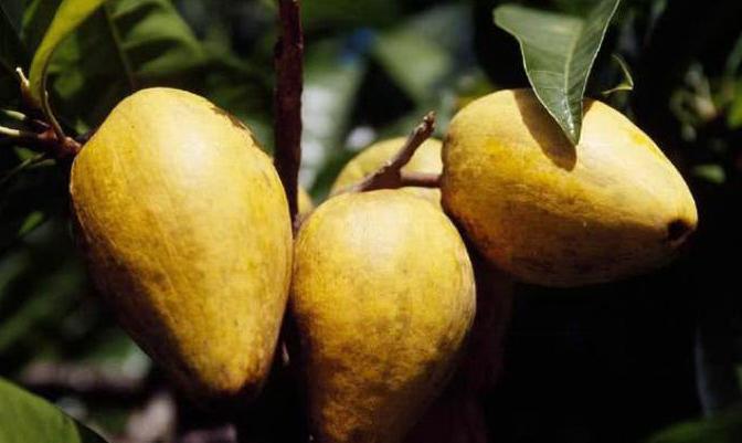 立秋后,不妨常食此果,排毒美颜,有益肠胃