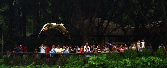 广州鳄鱼公园 全球最大的鳄鱼主题公园