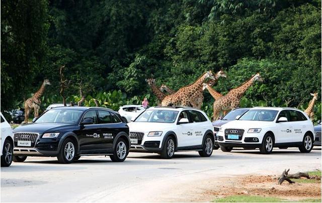2016奥迪q5长隆野生动物世界亲子探秘之旅
