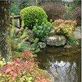 费兹罗花园