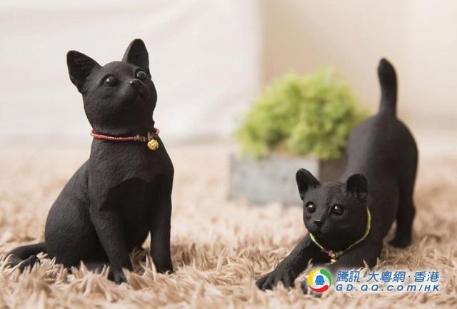 黑色的宠物? 不只摆设般简单