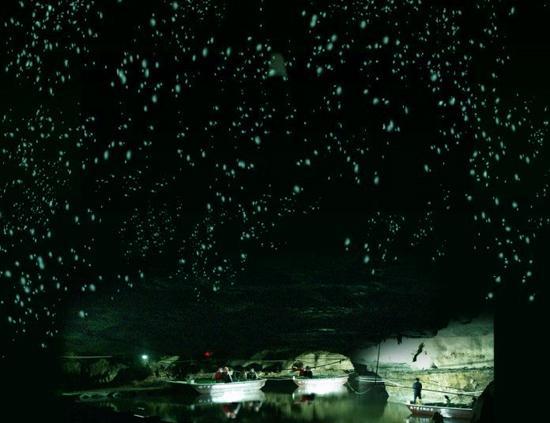 初夏夜游趣 与萤火虫捉迷藏