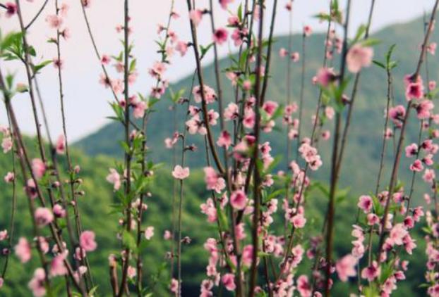 深圳最美踏青赏花点,错过又要等一年!