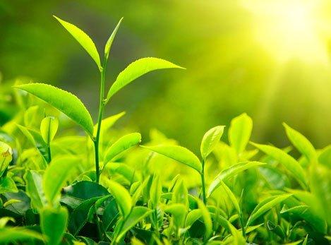 春季养生重在养肝从饮食和运动做...