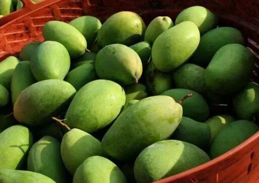 没有吃过桂七,别说你吃过芒果!