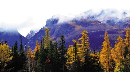 寻找秋天的原始森林图片