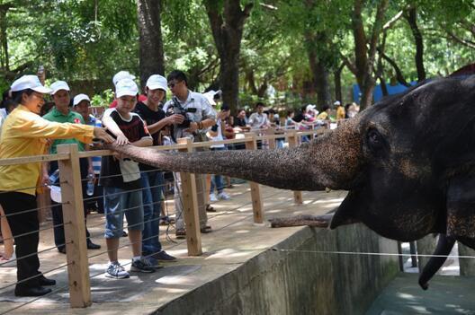 环卫职员子女喜游深圳野生动物园_大粤网_腾讯网
