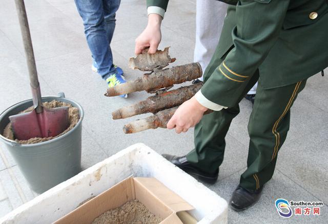 汕头渔民一网捞到3枚旧炮弹 尚存弹药