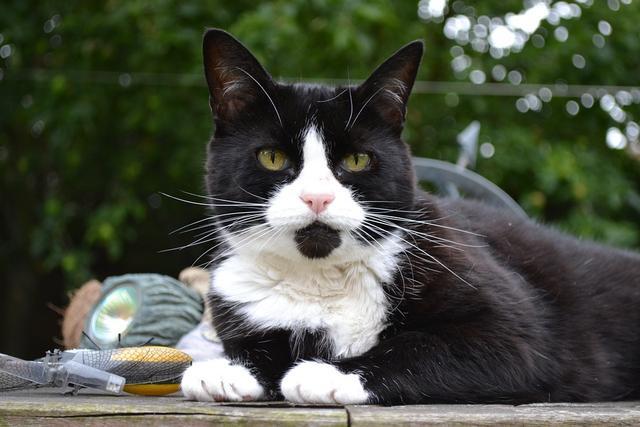 黑白花纹动物图片