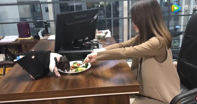 """一度红过papi酱的""""办公室小野"""",有着怎样的幕后推手?"""