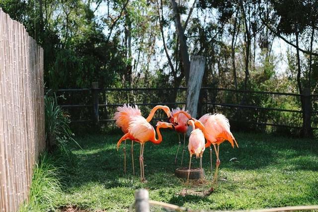 游圣地亚哥动物园 送你五个省钱小贴士_大粤网_腾讯网