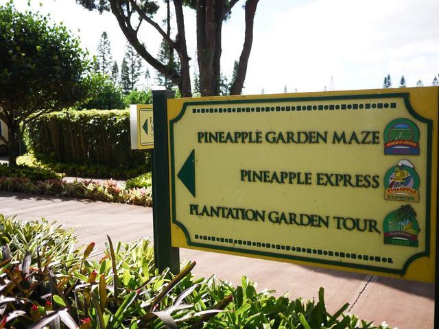 世界最大的迷宫 尽在夏威夷Dole Plantation